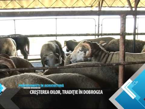 MARIA GROUP. Profesionisti In Agricultura 21 februarie 2014 - MARIA GROUP. Profesionisti In Agricultura 21 februarie 2014