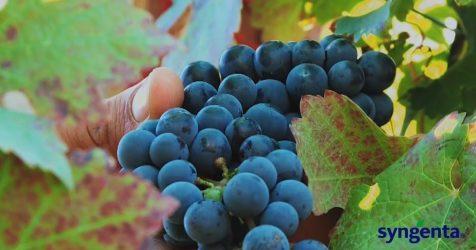 - Forumul de viticultura Syngenta, by btvideo.ro, decembrie 2016, productie video